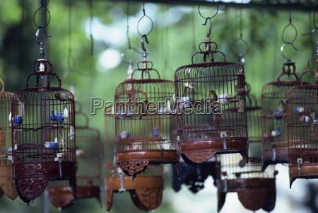 paseo viaje primer plano asia aves