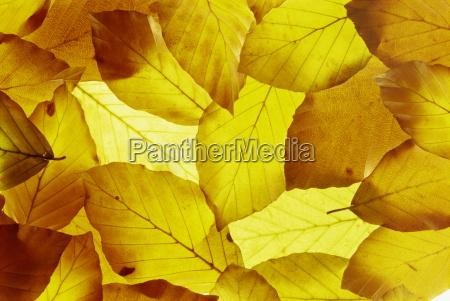 paseo viaje hojas botanica horizontalmente fotografia