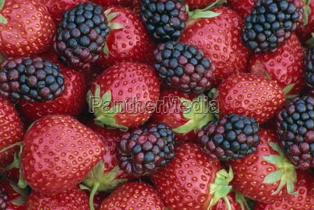 fresas y moras inglaterra reino unido