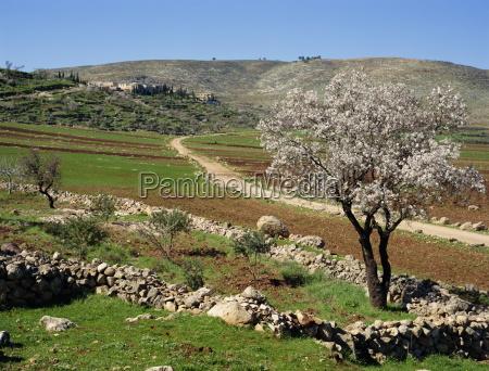 paseo viaje arbol arboles agricultura horizontalmente