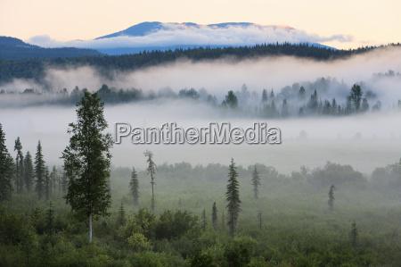 temprano en la manyana la niebla