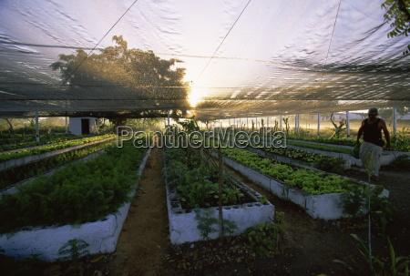 agricultura organica cuba indias occidentales centroamerica