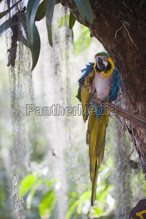blue macaw el gallineral park san