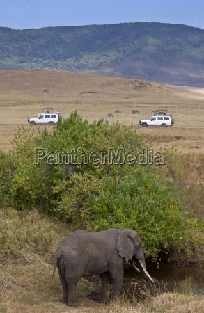 elephant feeding in ngoro ngoro crater