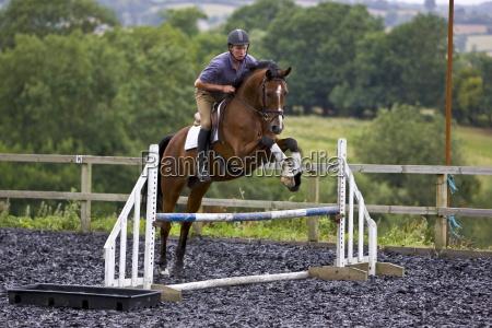 joven aescuela un caballo holandes warmblood