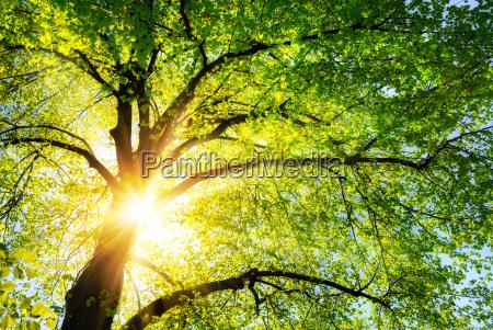 el sol brilla caliente a traves