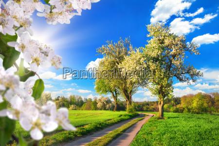 un paraiso en primavera paisaje idilico