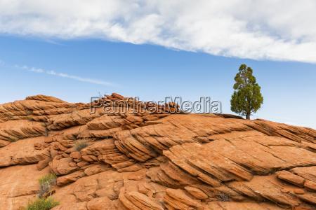 paseo viaje arbol nube eeuu rocas