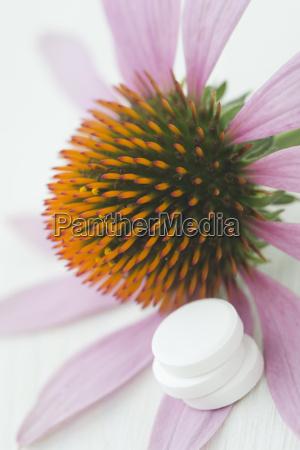 acuerdo salud flor planta madera las