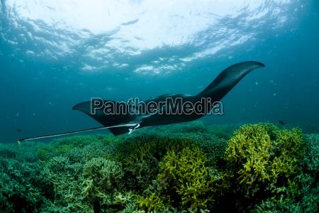 movimiento en movimiento animal pescado submarino