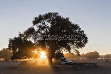 arbol trafico parque nacional africa namibia