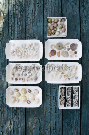 cajas con diferentes mejillones y caracoles