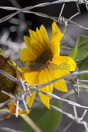 medio ambiente flor planta las maravillosas