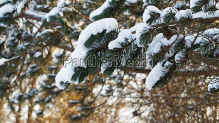 germany bavaria fuerstenfeldbruck snow covered branches