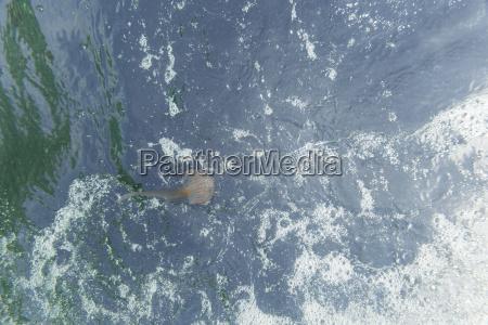 espanya mallorca mediterraneo malva stinger