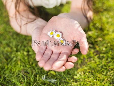 mano de mujer sosteniendo flores margarita