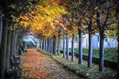 hoja arbol hojas otonyal baviera alemania