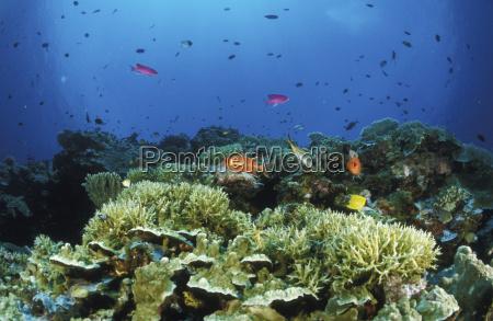 movimiento en movimiento medio ambiente pescado