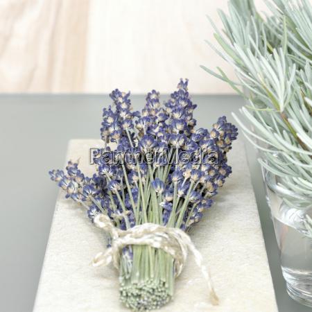 flor planta frescura decoracion peciolo lavanda