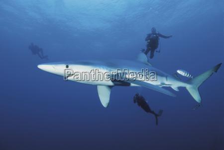 animal pescado submarino al aire libre