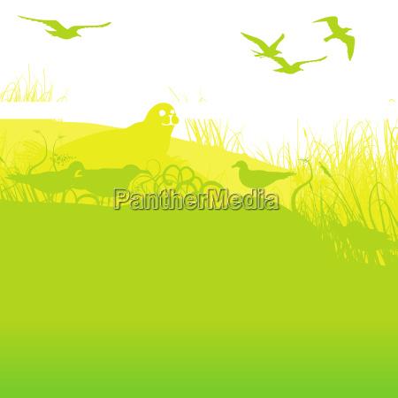 sello en la orilla con gaviotas