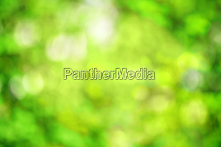 abstract bright green spring background