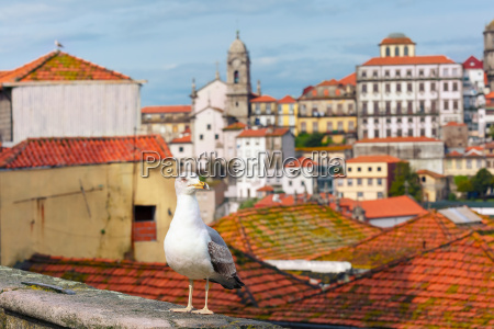 seagull and rooftops of old town