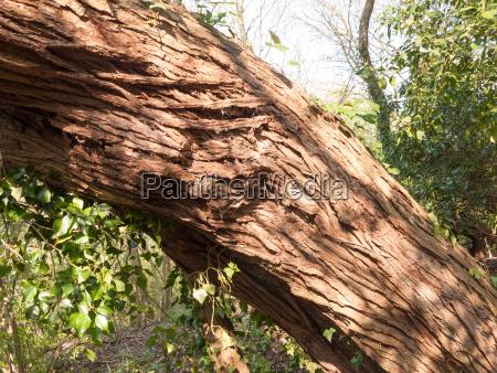 detail of tree bark in sun