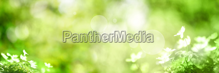 green background with small flowers