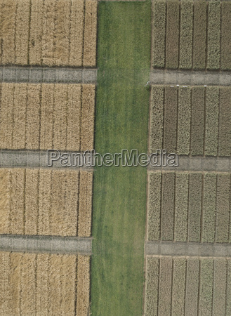 full frame aerial view of crops