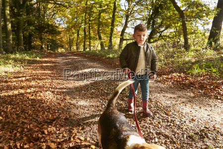 young boy walking dog in autumn