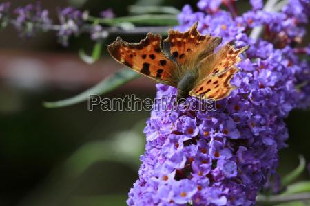 jardin mariposa colorido rara vez extincion
