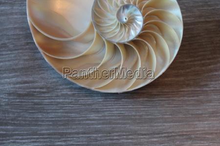 nautilus shell symmetry fibonacci half cross