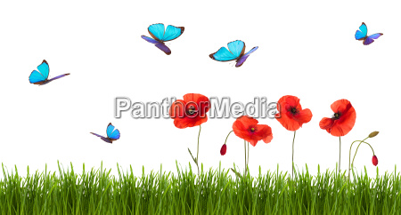 summer background with poppies and butterflies