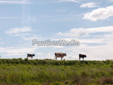 arbol superior horizonte caballo animal mamifero