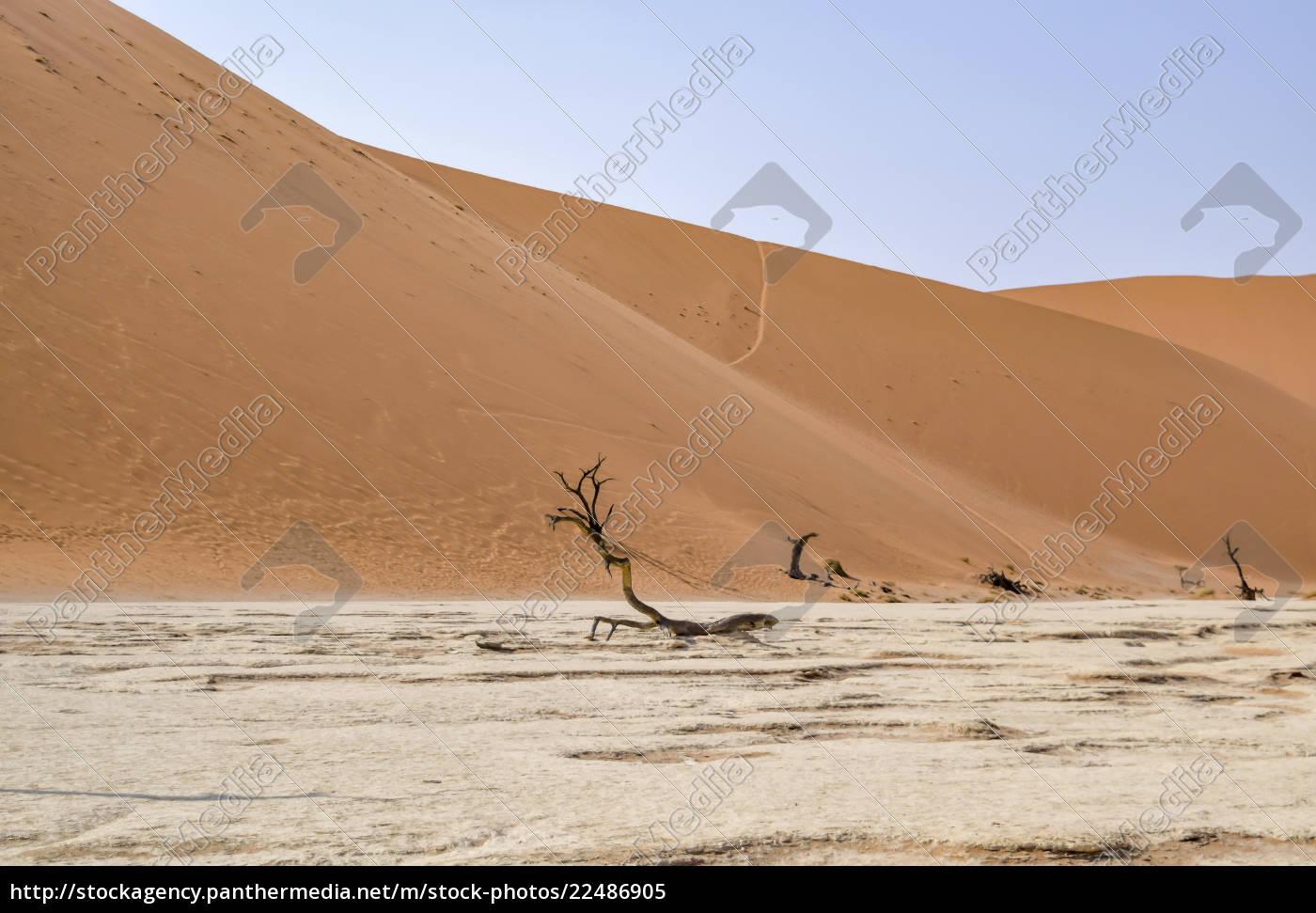 desierto, de, namib, en, namibia - 22486905