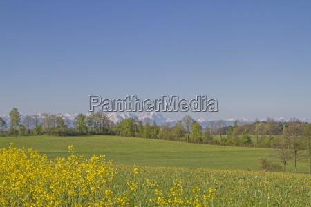 violacion violacion campo agricultura flores baviera