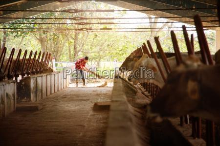 hombre limpieza granja agricultor barrido establos