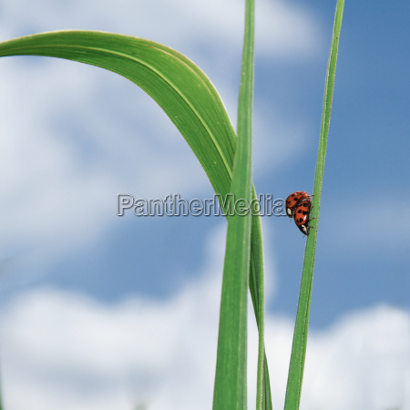 azul hoja verano veraniego escarabajo companyero
