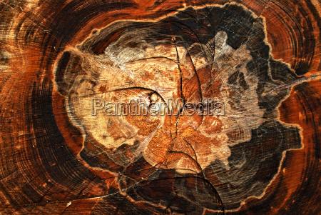 arbol madera europa tiempo el norte
