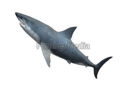 liberado muerte animal salvaje pescado puntero