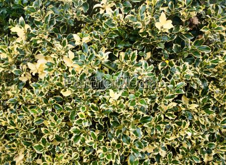 unique background texture of back garden