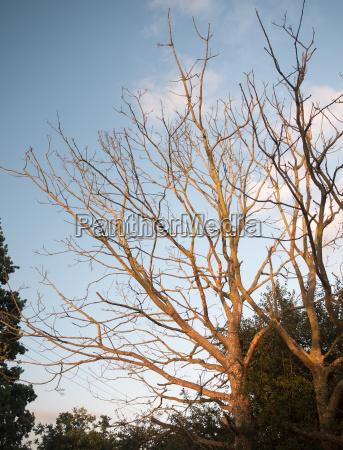 stunning sun set sunlit bare trees