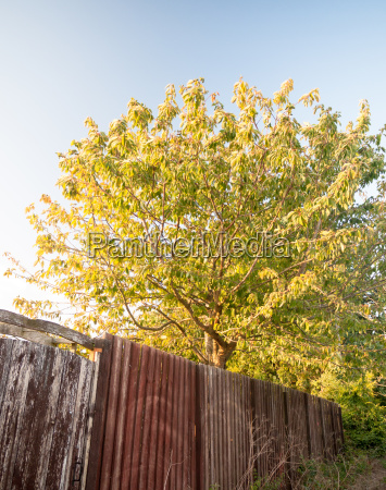 tree back garden in sun set
