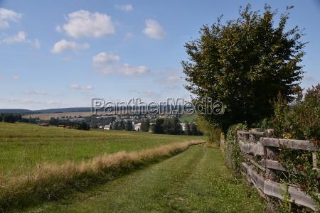 arbol camino de tierra erzgebirge tierras