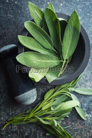 hoja especia frescura sabio col hierba