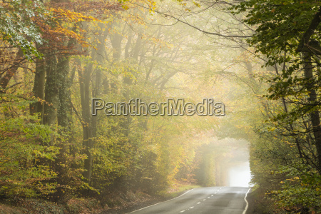 country road cutting through deciduous autumnal