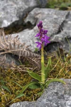 paseo viaje color flor planta caucasico