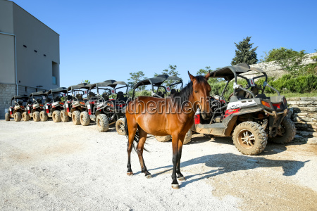 arvore topo cavalo animal trafego marrom