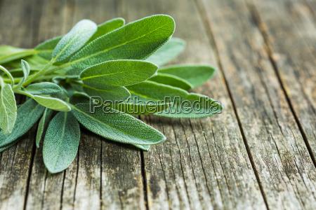 salvia officinalis hojas de salvia